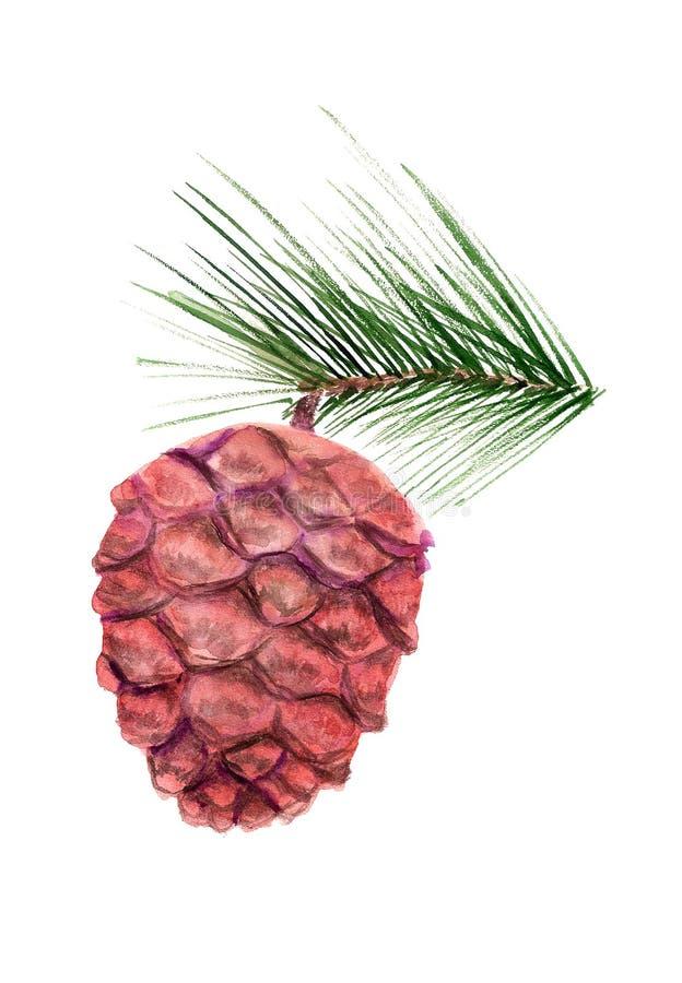 Cone do cedro com ramo ilustração do vetor