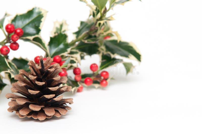 Cone do pinho e fundo festivos do Natal do azevinho fotografia de stock