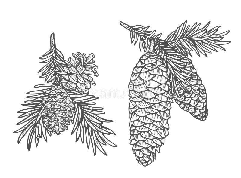 Cone do pinho e grupo da árvore de abeto ilustração royalty free