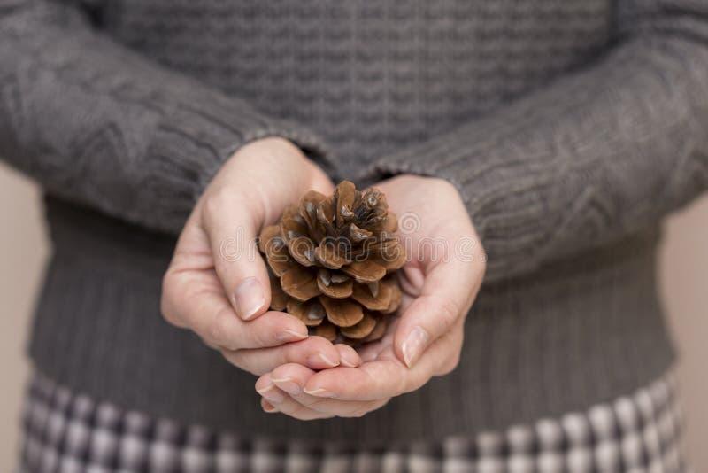 Cone do pinho nas mãos fêmeas foto de stock
