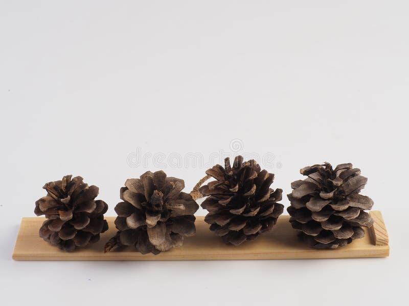 Cone do pinho no fundo branco foto de stock