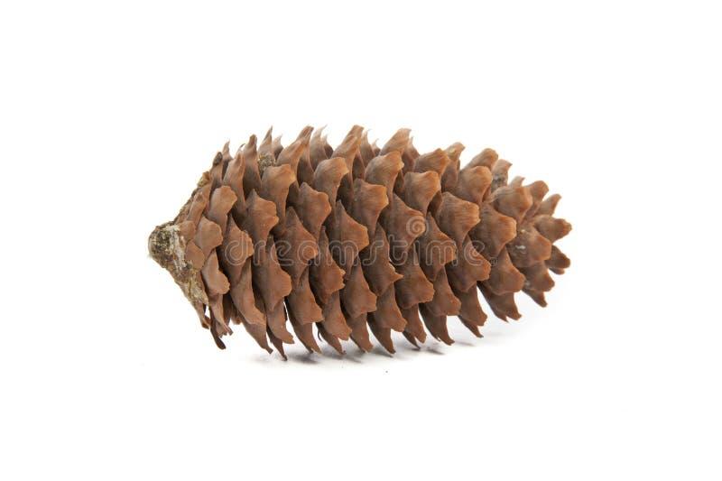 Cone do pinho no fundo branco. foto de stock