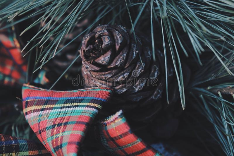 Cone royalty free stock photography
