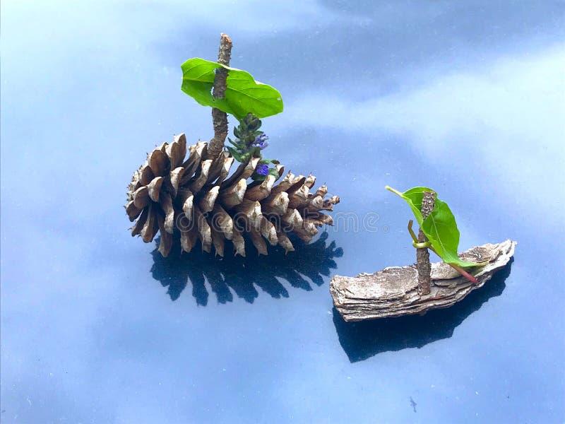 Cone and tree bark sailboats. Models of sailboats made of tree bark and a cone stock photos