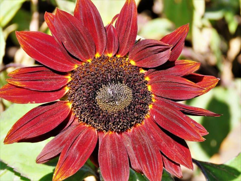Цветок, флора, завод, Coneflower стоковое изображение