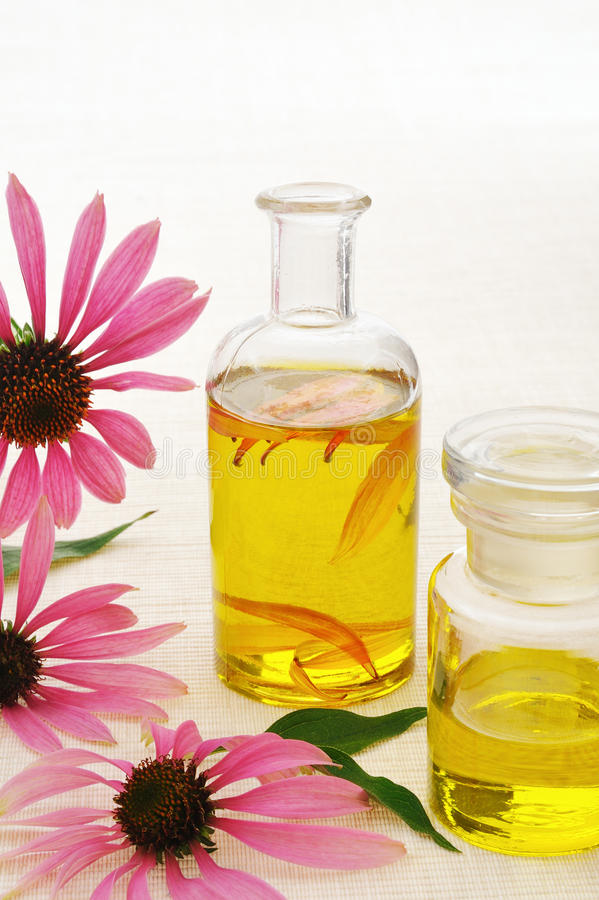 Coneflower essential oil in bottle royalty free stock image