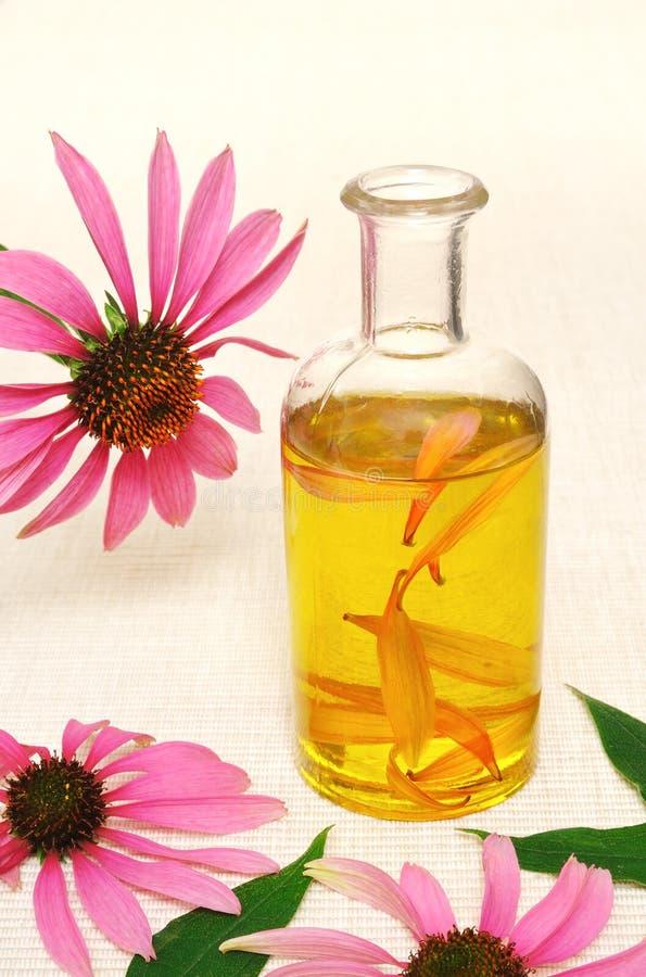 Coneflower essential oil in bottle stock photo