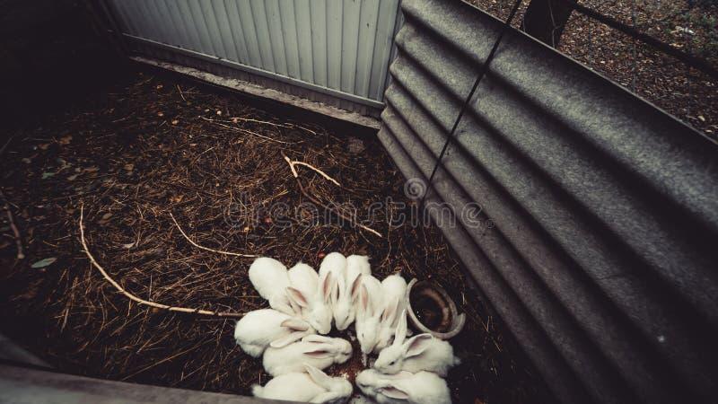 Conejito blanco que se sienta en un ?rbol tragado, conejos en el top fotos de archivo