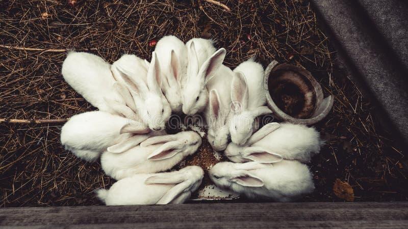 Conejito blanco que se sienta en un ?rbol tragado, conejos en el top fotografía de archivo libre de regalías