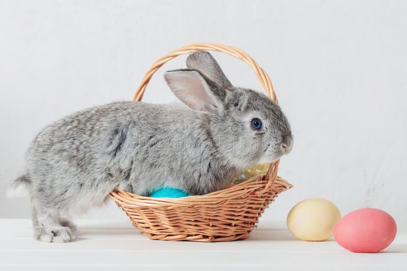 Conejito con los huevos de Pascua en el fondo blanco foto de archivo