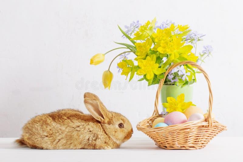 Conejito con los huevos y las flores de Pascua en el fondo blanco fotos de archivo libres de regalías