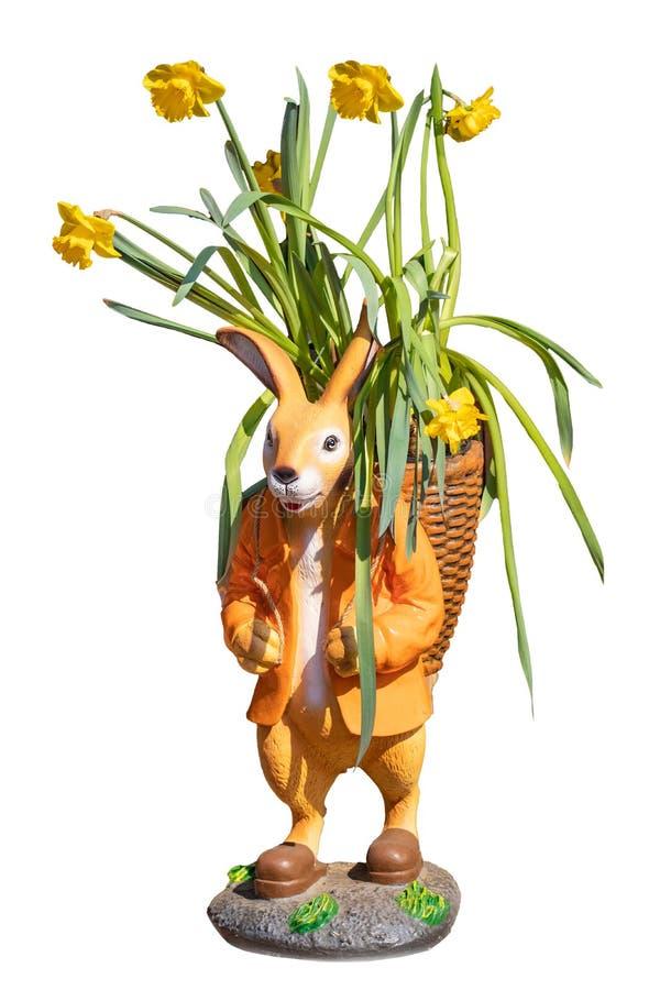 Conejito de pascua acortado Primer de un conejito de pascua con una cesta en la cual los narcisos amarillos florecientes se a?sla fotografía de archivo