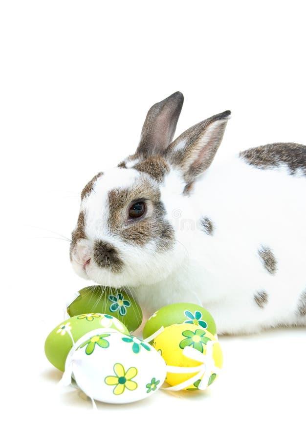 Conejito de pascua con los huevos foto de archivo libre de regalías