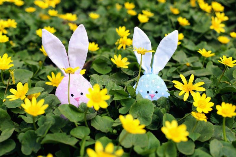 Conejito de pascua ocultado en un prado de la flor, flores amarillas de la primavera en un prado de la hierba verde Primavera del imagen de archivo