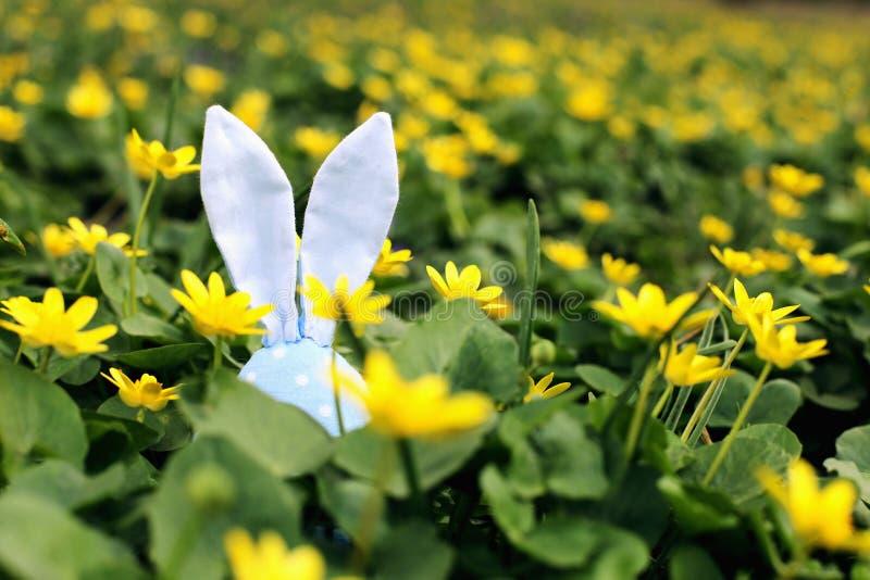 Conejito de pascua ocultado en un prado de la flor, flores amarillas de la primavera en un prado de la hierba verde Primavera del foto de archivo libre de regalías