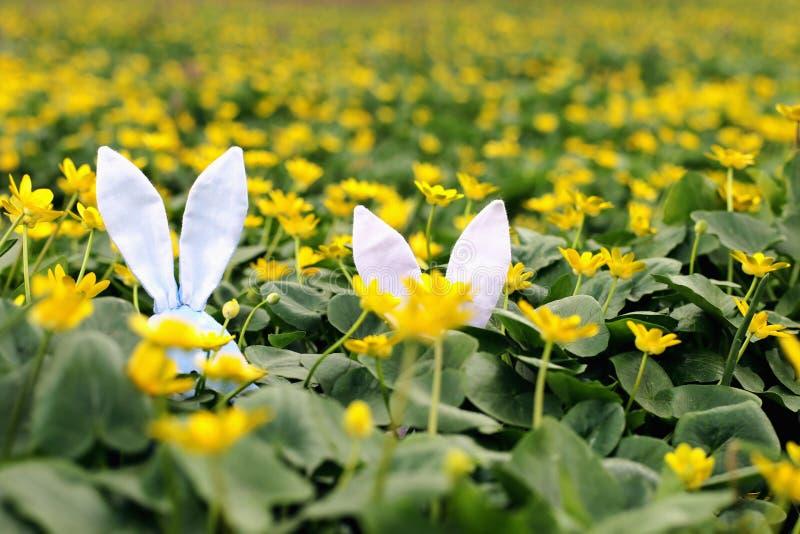 Conejito de pascua ocultado en un prado de la flor, flores amarillas de la primavera en un prado de la hierba verde Primavera del imagen de archivo libre de regalías