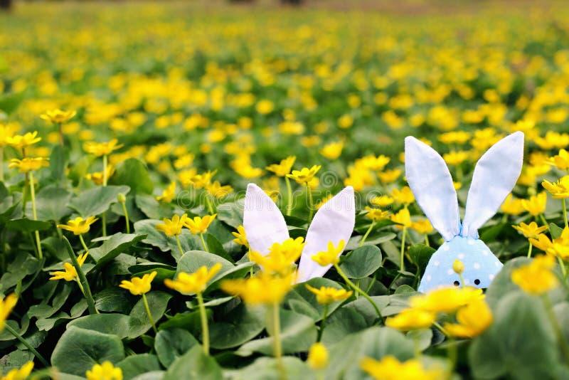 Conejito de pascua ocultado en un prado de la flor, flores amarillas de la primavera en un prado de la hierba verde Primavera del fotografía de archivo libre de regalías