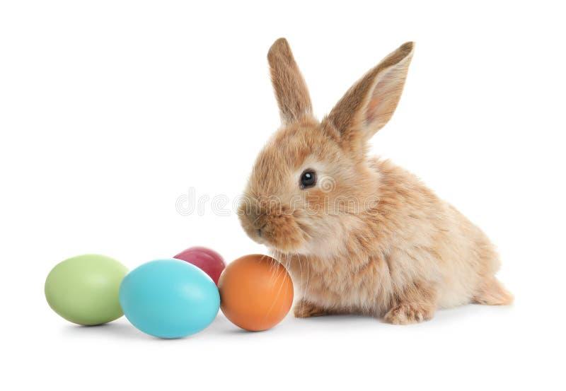 Conejito de pascua peludo adorable y huevos coloridos en blanco imagen de archivo libre de regalías