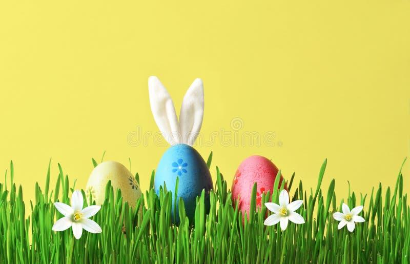 Conejito divertido de Pascua en hierba verde con los huevos de Pascua Fondo de Pascua imagenes de archivo