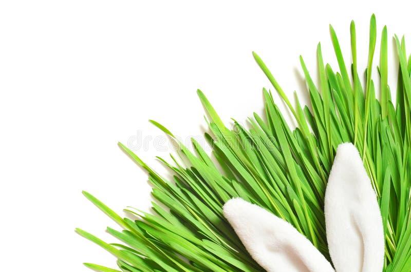 Conejito divertido de Pascua en hierba verde Fondo de Pascua imágenes de archivo libres de regalías
