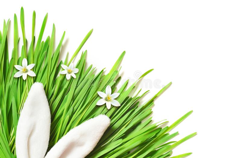 Conejito divertido de Pascua en hierba verde Fondo de Pascua fotos de archivo