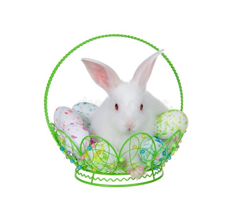 Conejito en cesta de alambre con los huevos de Pascua aislados foto de archivo