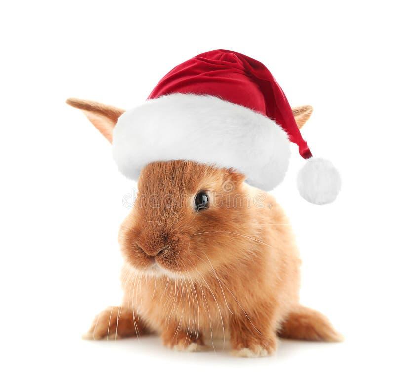 Conejito mullido lindo en el sombrero de Papá Noel en el fondo blanco imagen de archivo libre de regalías