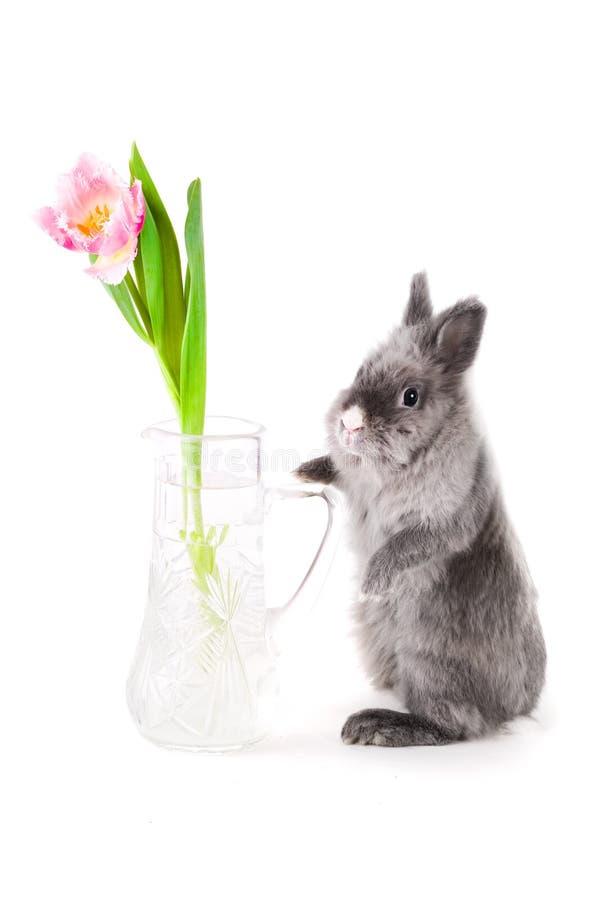 Conejito que se coloca cerca del florero imagen de archivo libre de regalías