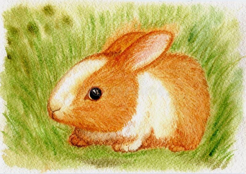 Conejito rojo en la hierba verde foto de archivo