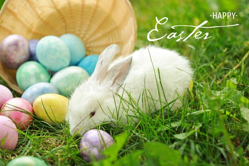 Conejito y huevos de Pascua lindos en hierba verde al aire libre fotos de archivo libres de regalías