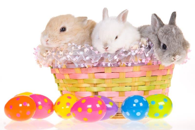 Conejitos de pascua en cesta con los huevos imagen de archivo libre de regalías