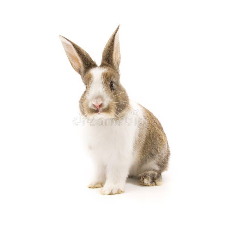 Conejo adorable aislado en blanco foto de archivo