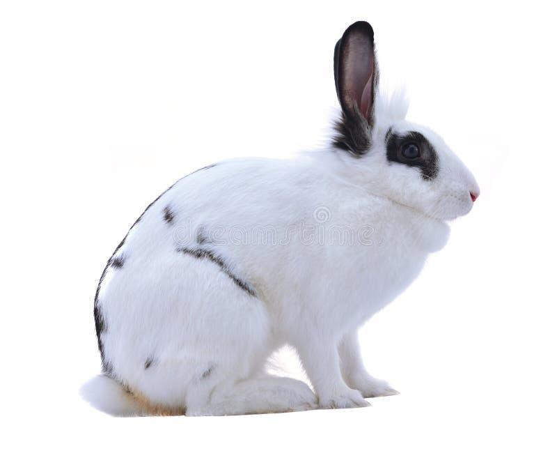 Conejo adorable aislado en un fondo blanco foto de archivo libre de regalías