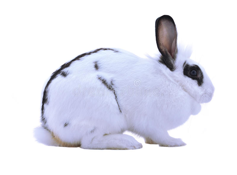 Conejo adorable aislado en un fondo blanco imagen de archivo