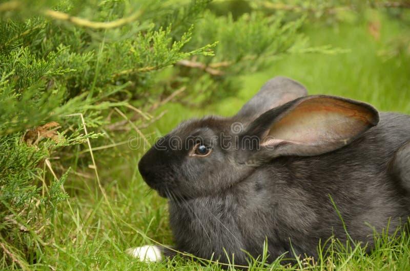 Conejo agradable fotografía de archivo