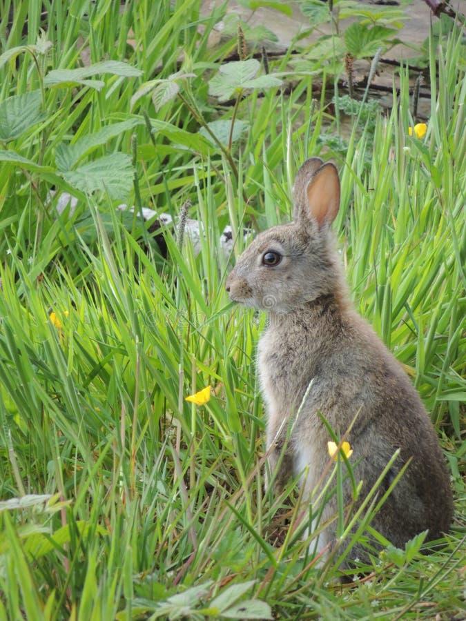 Conejo alerta imágenes de archivo libres de regalías