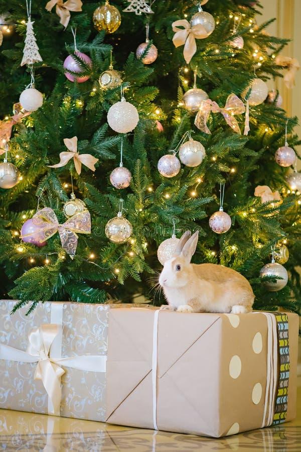 Conejo bajo el árbol de navidad imagen de archivo