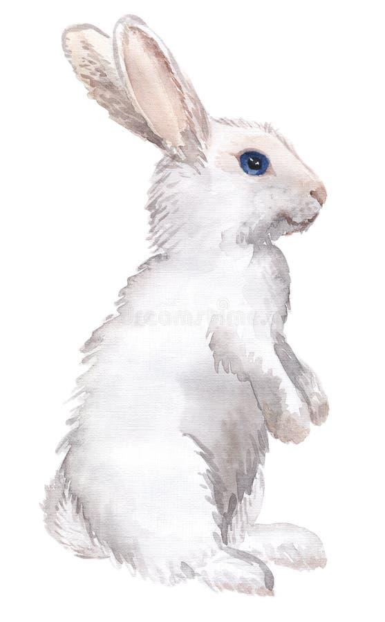 Conejo blanco aislado libre illustration