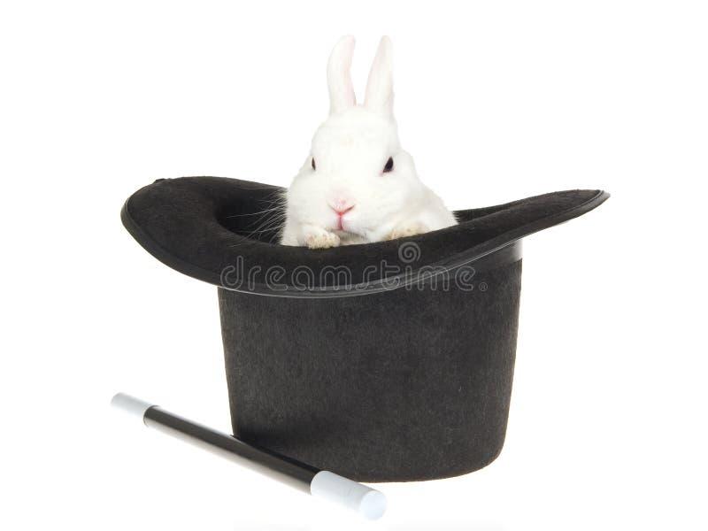 Conejo blanco con el sombrero superior negro imagen de archivo libre de regalías