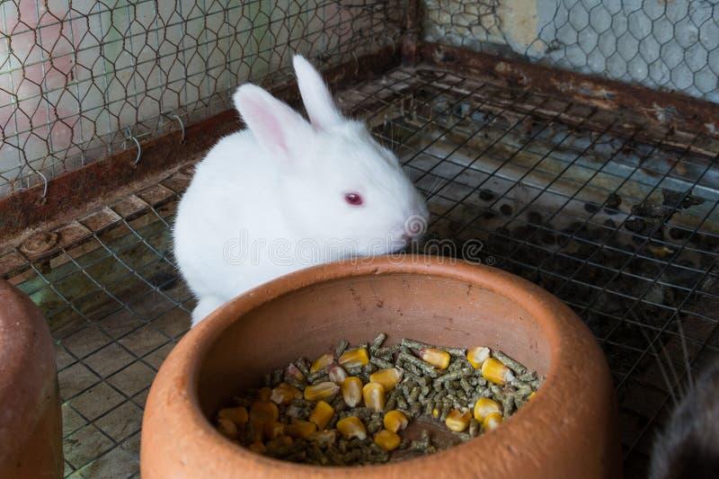 Conejo blanco del bebé en la jaula imagen de archivo libre de regalías