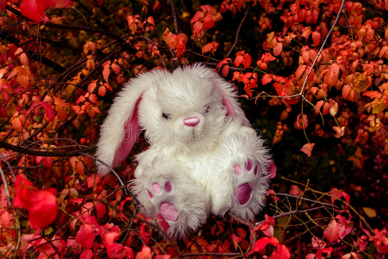 Conejo blanco en el bosque de hadas foto de archivo
