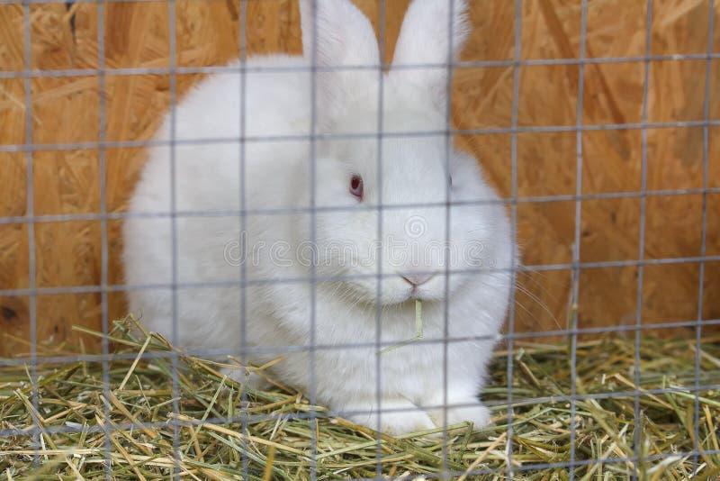 Conejo blanco que se sienta en una jaula foto de archivo libre de regalías