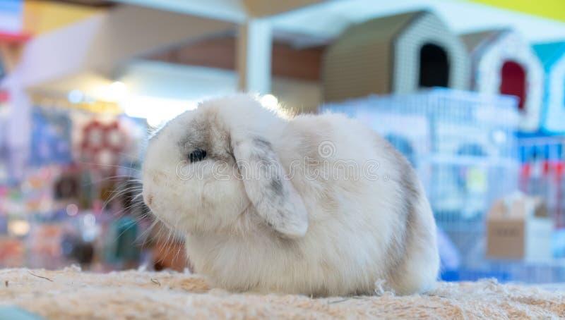 Conejo blanco soñoliento que se sienta en la manta mullida beige fotos de archivo