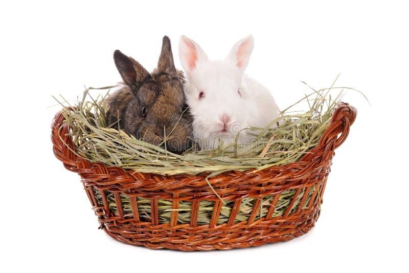 Conejo blanco y gris del bebé imagen de archivo