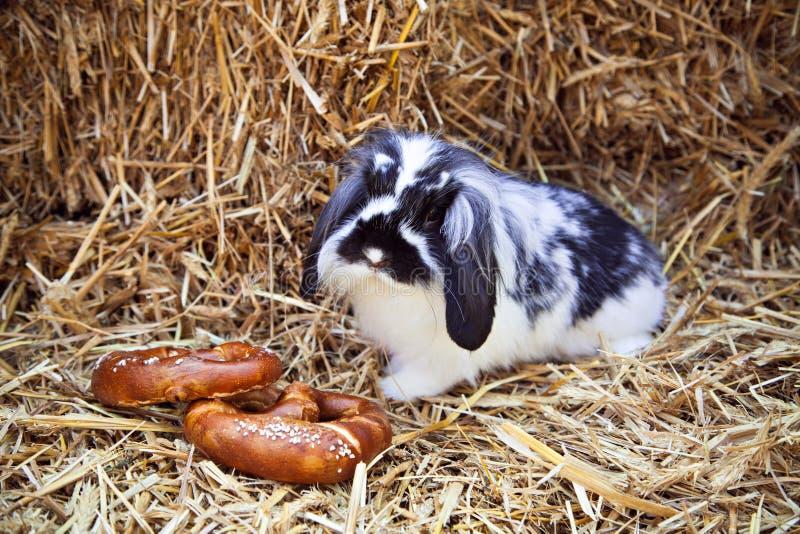 Conejo con dos pretzeles que se sientan en paja foto de archivo libre de regalías