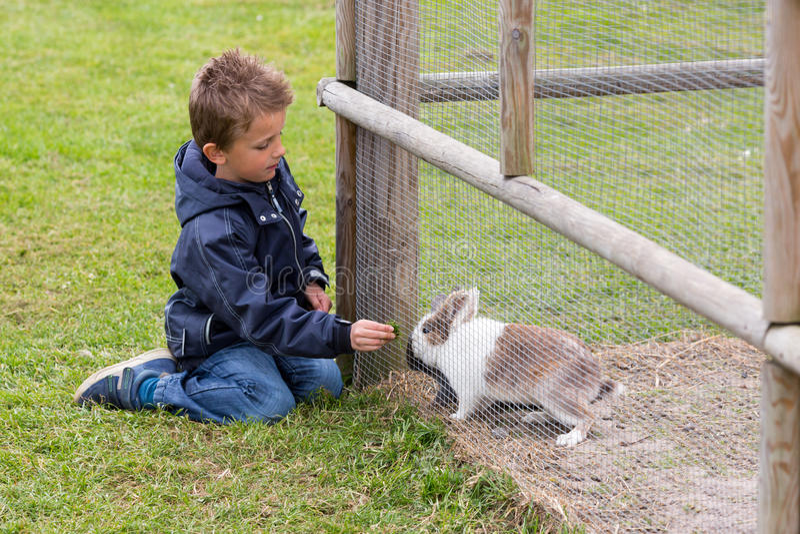 conejo de alimentación del muchacho fotografía de archivo libre de regalías