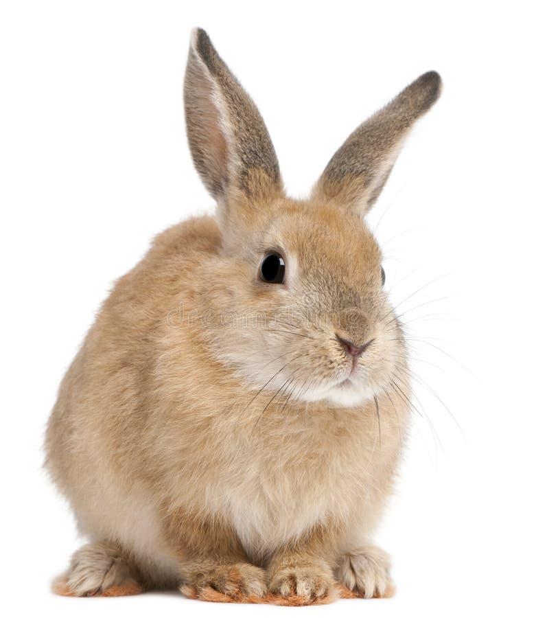 Conejo de conejito imagenes de archivo
