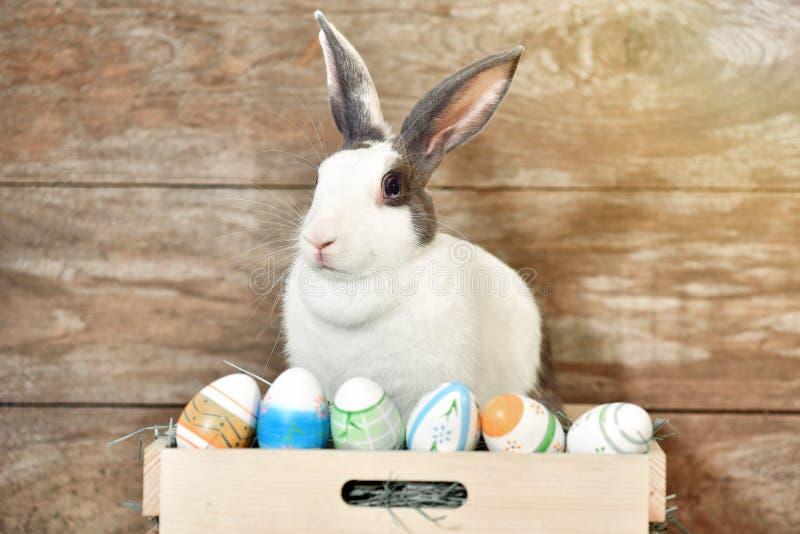 Conejo de conejito gris que parece frontward al espectador, poco conejito que se sienta en la caja de madera con sus juguetes imagenes de archivo