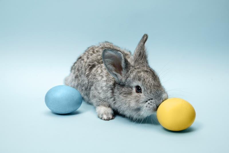 Conejo de conejito de pascua con los huevos pintados en fondo azul Concepto del día de fiesta de Pascua foto de archivo libre de regalías