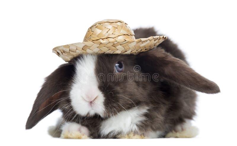 Conejo de Mini Lop del satén que hace frente con un sombrero de paja, aislado imagen de archivo